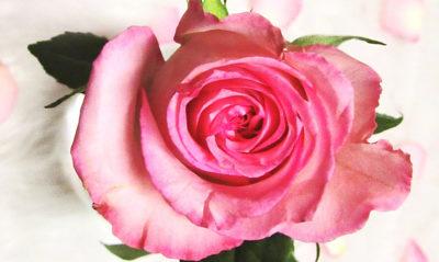NIVEA MICELLAIR Rose Water linija za čišćenje lica je savršena