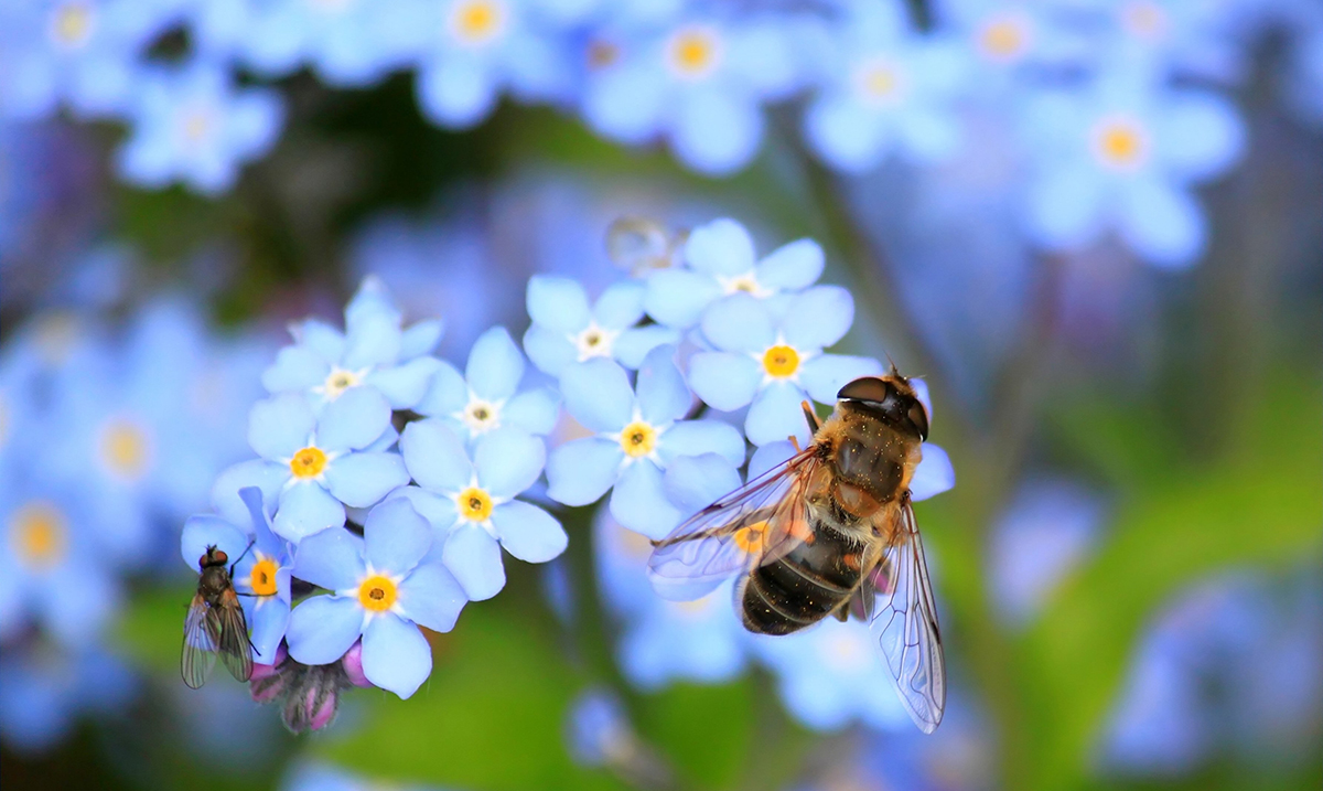 #BeeSupernatural – SVETSKI DAN PČELA
