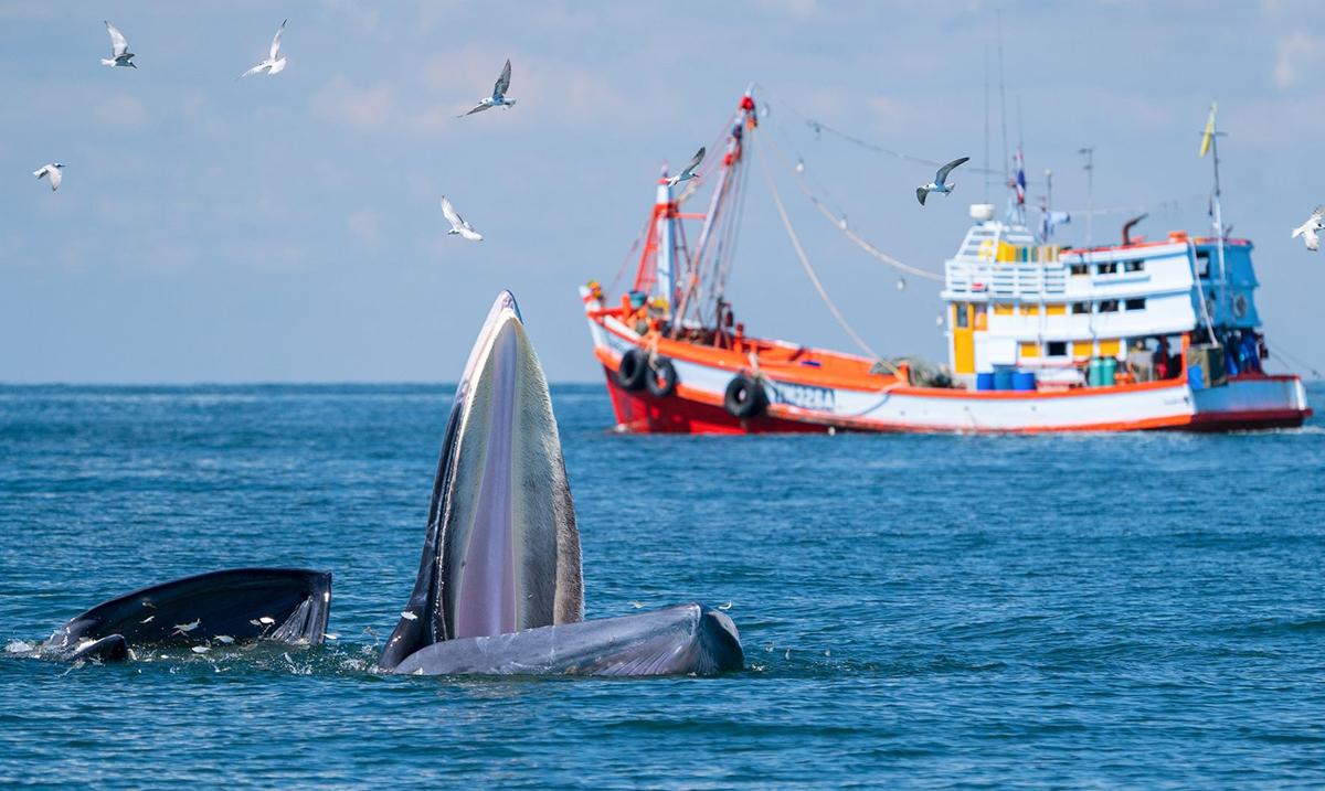 Emisijama koje podižu svest kanal Discovery obeležava Svetski dan okeana